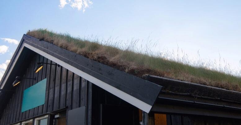 voorbeeld sedum dak